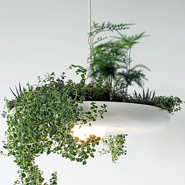 5 Amazing Planter Designs