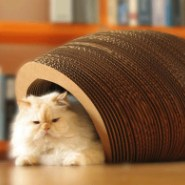 7 Coolest Pet Furniture Items