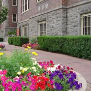 Flower Beds Care and Maintenance