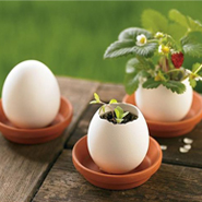Go Green &#038; Recycle: DIY Planter Pots