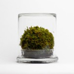 green-solution-mosser-terrarium-3