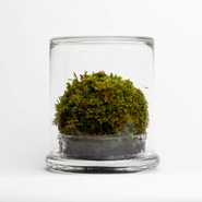 Green Solution: MOSSER Terrarium