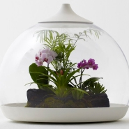 Hi Tech 'Biome' Terrarium by Samuel Wilkinson