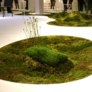 Moss In Interior And Product Design