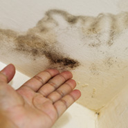 Mould in the Bathroom: What Next!