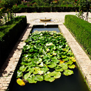 Outdoor Water Features: Pond