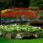 unsual-flower-bed-ideas-4