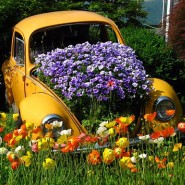 Unusual Flower Bed Ideas